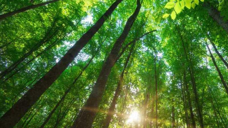 imagem das árvores